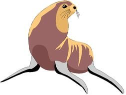 Sea Lion Images drawing