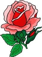 Beautiful Red Rose drawing