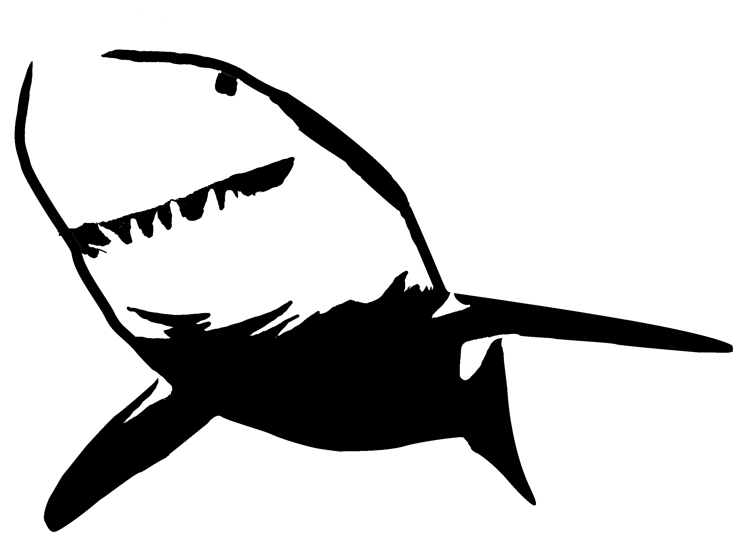 photo relating to Shark Stencil Printable named Perfect White Shark Stencil Printable free of charge impression