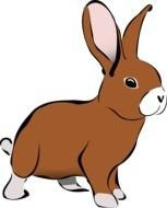 brown rabbit as picture