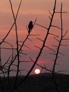 bird silhouette sunset