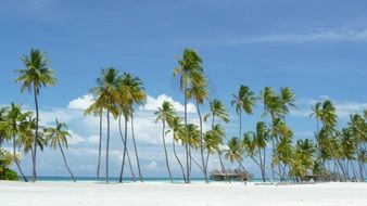 palm trees on an island paradise in the Maldives