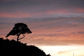 tree silhouette on a hill during sunset