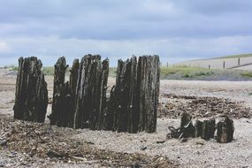 beach shore withered old black wood posts