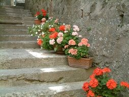 stone old staircase with beautiful flowers
