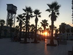 palms sunset barcelona