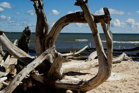 dry dead tree on the shore of the Baltic Sea