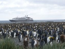 many penguins off the coast of the southern ocean