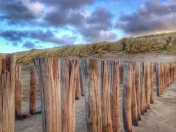 Domburg wood in the sand