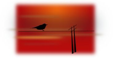 bird scenery silhouette red drawing