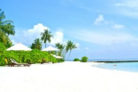coconut tree resort holiday Maldives
