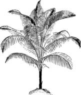 graphic image of black and white palm