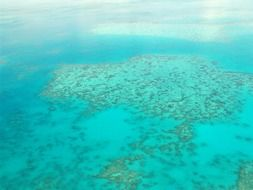 great barrier coral reef