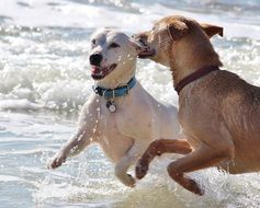two dogs in the spray of the surf
