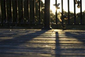 wood deck sunset shadows