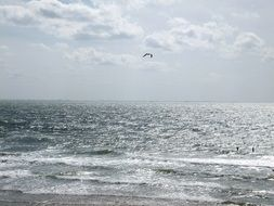 lone seagull over the fretfu north sea