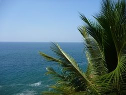 palm tree leaves above blue water