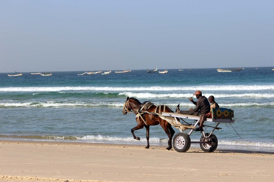 Horses on the beach in Senegal