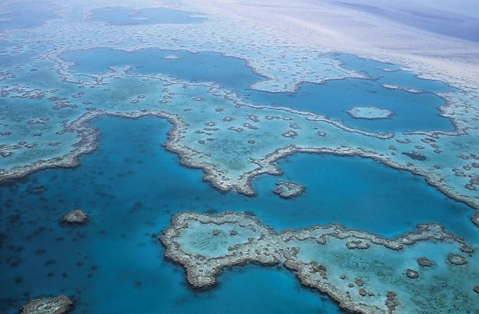 t barrier reef coral australia
