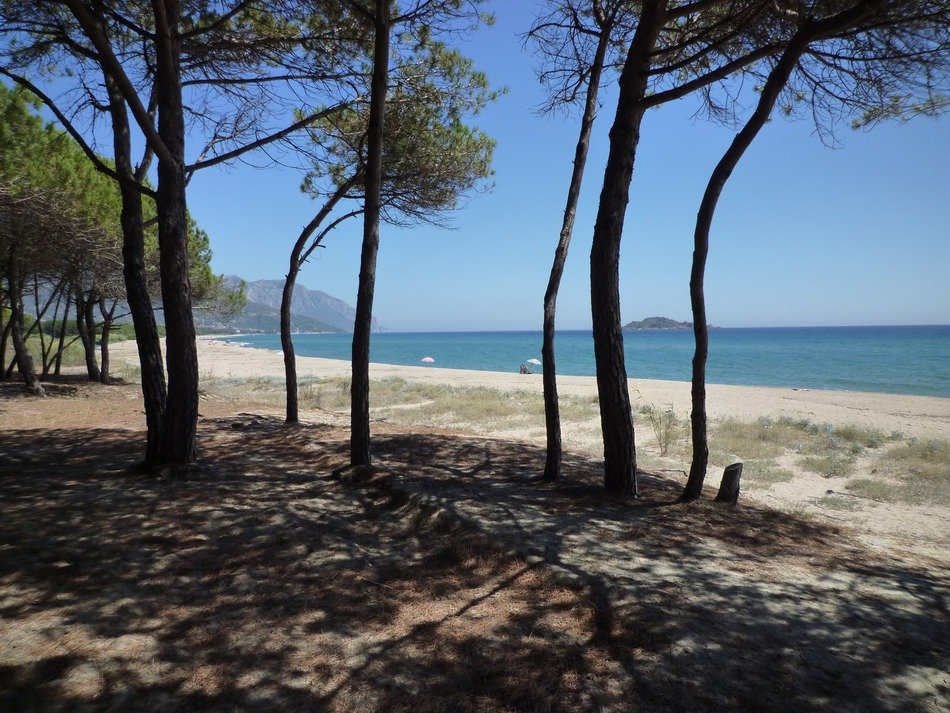 beach with trees in sardinia