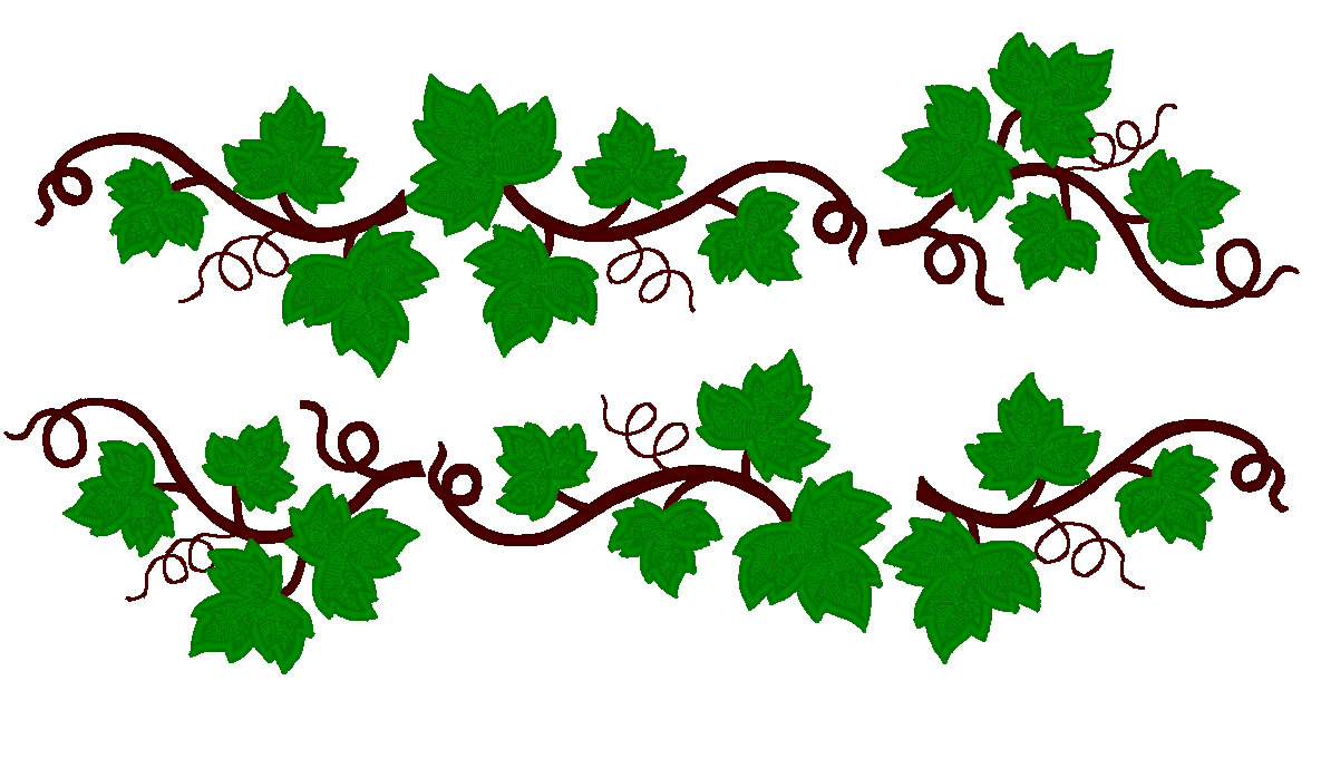 Grape Leaves Ivy Drawing Free Image
