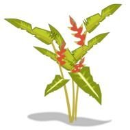 Beautiful heliconia plant clipart