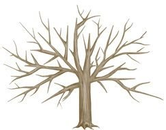wide bare tree, drawing