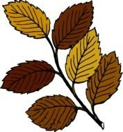 Autumn Leaves On Branch clipart drawing