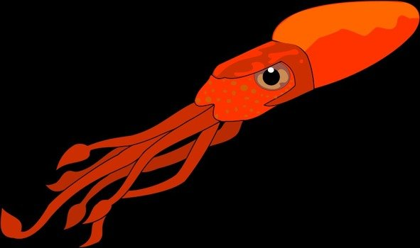 red squid
