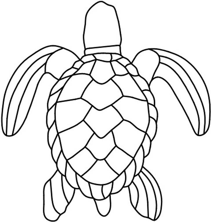 turtle shell pattern - 728×766
