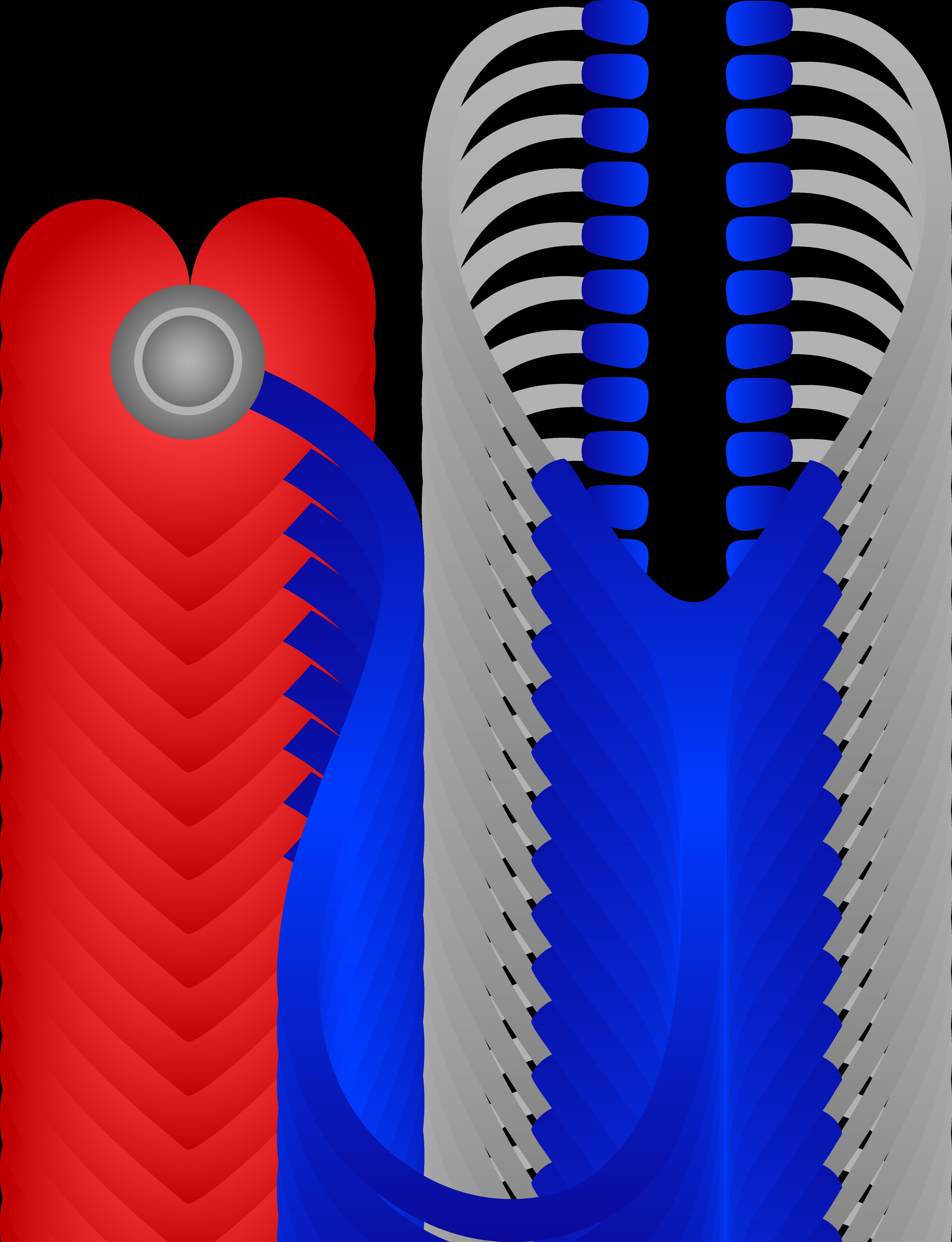 Stethoscope heart. Listening to beat free