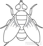 Download Fly Insects Black White Outline 972