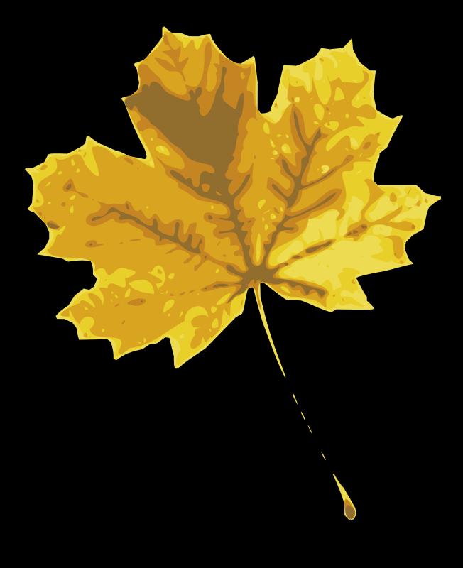Кроссфаера приколы, картинки листья желтые для детей