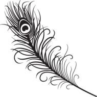 white peacock feather on a black background