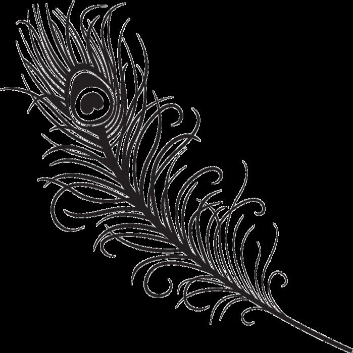 Simple Peacock Feather Design Panda Free Images free image
