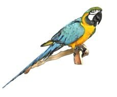 drawn big blue-yellow parrot