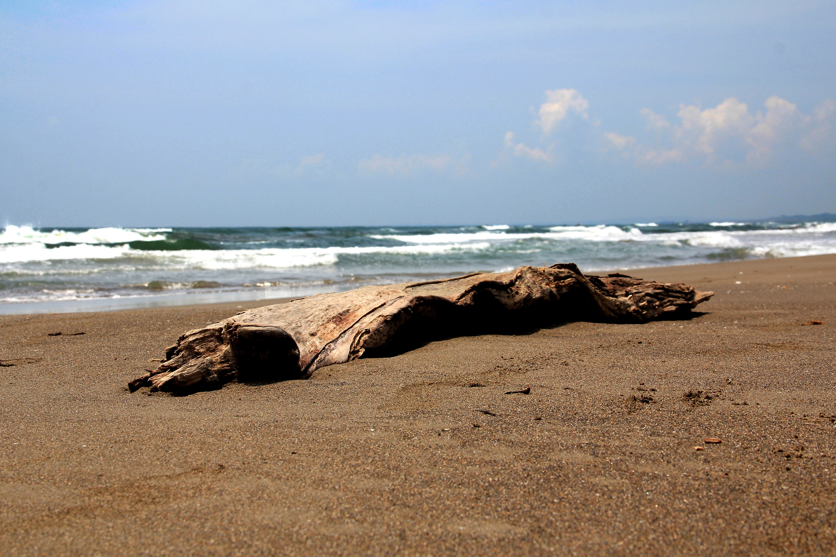 Beach Wood Veracruz Mexico Sand