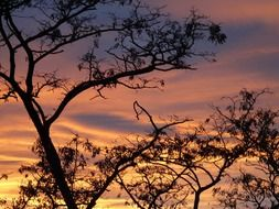 sunset sky clouds afterglow tree N3