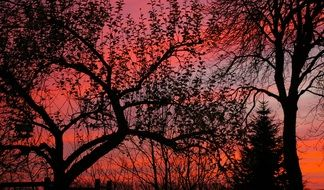 trees against the red sky