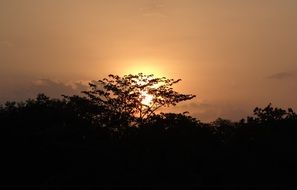 sun setting over trees in India