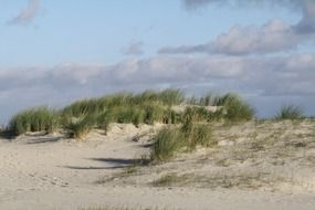 beach dunes north sea