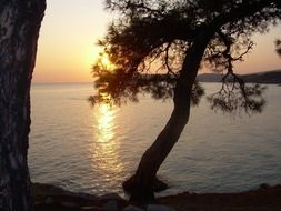 sunset above sea behind pine tree, greece, thassos
