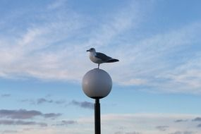 Seagull on a round street lamp