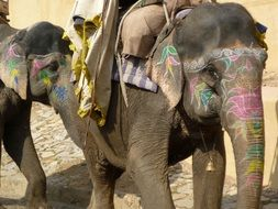 Colorful elephants in Rajasthan in India