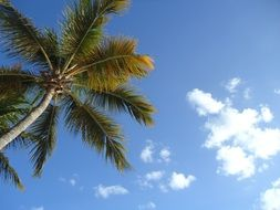 palm tree on cloud background
