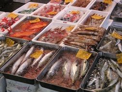 selling fish at the Tsukiji market