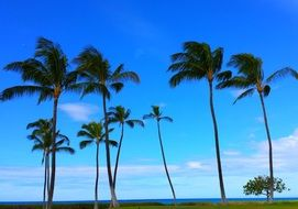 palm trees with green branches against the blue sky