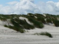 dunes near the north sea