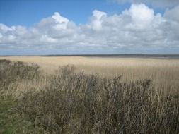 wild dunes at north sea