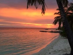 romantic pink sunset with palm trees beach